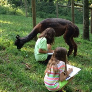 Campers drawing the alpacas, one of many art activities available at camp.