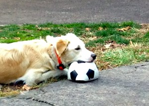 Molly  and her ball.